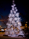 A Silver Christmas Tree Glows in Downtown Georgetown