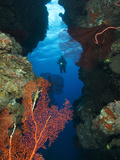 A Scuba Diver Explores a Coral Ledge