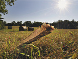 A Wild Turkey Tailfeather in a Field Along Historic Maple Grove Road