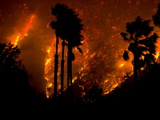 The Yorba Linda-Corona Fire Rages Behind Palm Trees in Carbon Canyon