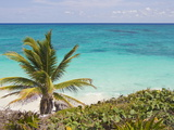 A Palm Tree on the Coast of the Yucatan Peninsula Near Tulum  Mexico
