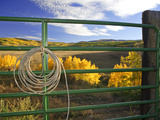 A Cowboy Rope Hanging on a Cattle Fence