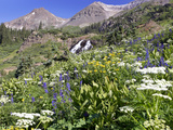 Wildflowers and Waterfall at Yankee Boy Basin Colorado