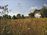 A Barn and Wildflowers in the Maple Grove Road Rural Historic District