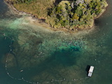 Aerial of Florida Manatees Gathered Near Kings Spring