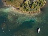 Aerial of Florida Manatees Gathered Near Kings Spring