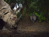 A Camera Trap Captures a Bloodied Indian One-Horned Rhino