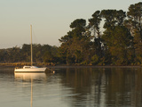 A Sailboat Moored Near a Stand of Eucalyptus Trees at Sunrise