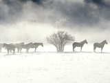 Horses on a Snowy Day in Colorado