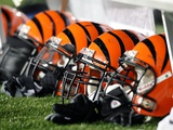 Bengals Patriots Football: Foxborough  MASSACHUSETTS - Cincinnati Bengals Helmets