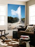Lady Knox Geyser  Wai-O-Tapu Geothermal Area  Taupo Volcanic Zone  New Zealand