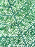 Fern leaf vein
