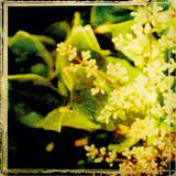 Vintage Garden VI