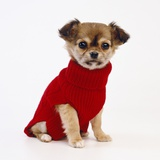 Puppy in Sweater