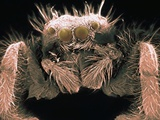 Microscopic View of Spider