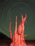 Star Trails and Bristlecone Pine Tree