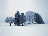 Group of trees in winter