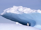 Antarctica  adelie penguin in front of iceberg
