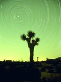 USA  California  Joshua Tree National Park and star trails at night