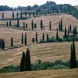 Cypresses and stubble fields in the Tuscany
