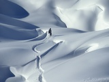 Snowboarder Riding in Powder Snow  Austria  Europe