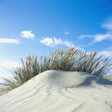 Sand dune with beach grass  (Eiderstedt)  Schleswig-Holstein  Germany