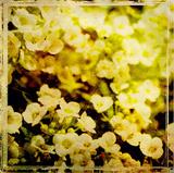 Vintage Garden VII