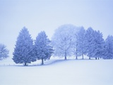 Trees in snow-covered landscape in winter
