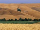Italy  Tuscany  Crete Senesi