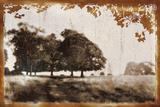 Tree Meadow II