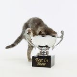 Kitten Climbing into Trophy