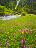 Beautiful Meadow with Stream