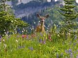 Deer in Wildflowers Papier Photo par Craig Tuttle