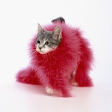 Kitten Wearing Feather Boa