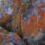 Red Lichen on Rocks