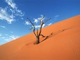 Dead tree in the Namib-Naukluft-Park  Namibia