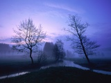 Misty River and Forest at Dusk  Baden-Wuerttemberg  Germany