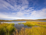 Tundra Marsh