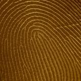 Human Fingertip
