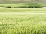Rolling Grassland