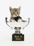 Kitten in Trophy