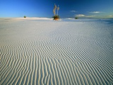 Rippled Sand Dunes in White Sands National Park