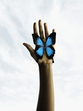Butterfly on a human's palm