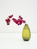 Orchid Flower in a Vase