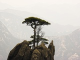 Pine Tree on Mountaintop