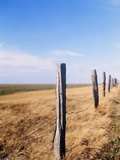 Wooden fence on meadow  St Peter-Ording  Germany