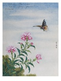 Chinese Watercolor of a Moth and Pink Carnations