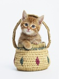 Orange Tabby Kitten in Basket