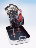 Turkey Standing in Cooking Pan