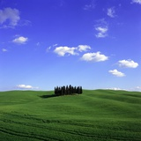 Cypress trees  Tuscany  Italy (near Torrenieri)